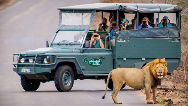 Day Tours and Safaris